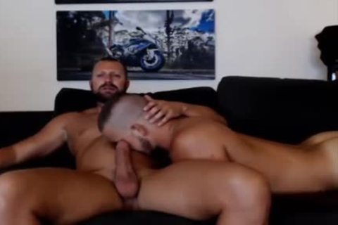 young Bear Sucks A mature Bears weenie Live On Cruisingcams Com